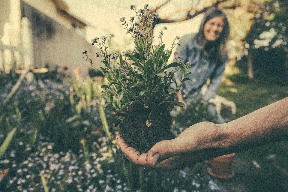 Twoj ogród marzeń na Osiedlu Owocowym